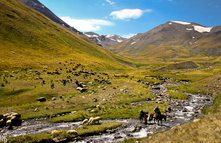 Passing a herd of sheeps while crossing a small freshwater creek
