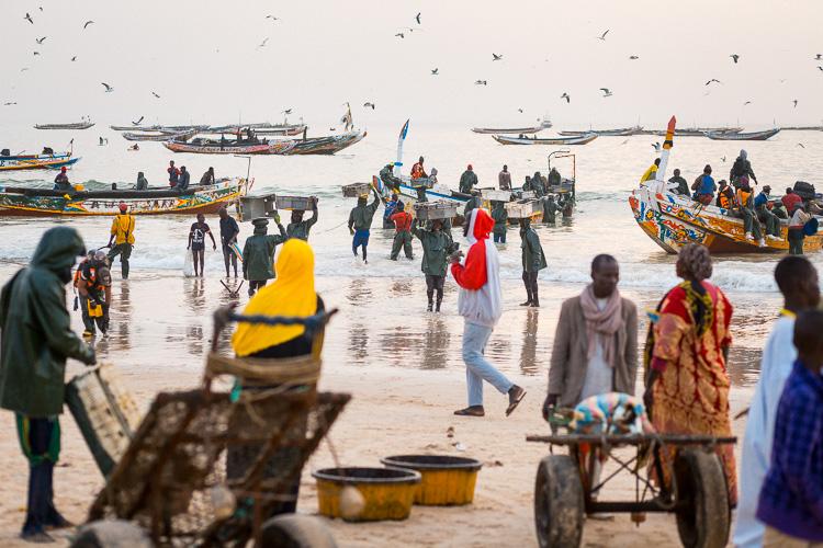 Noakchott fish market Mauritania
